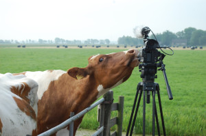 koe en camera