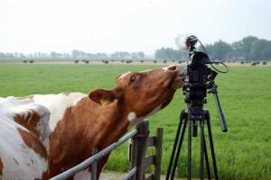 koe-en-camera