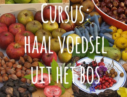 Cursus Voedsel uit het bos
