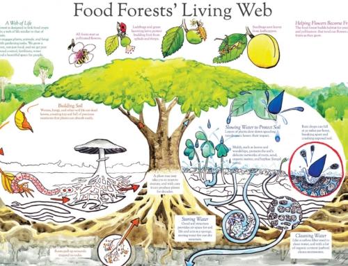 Voedselrijke bosbouwinnovatie